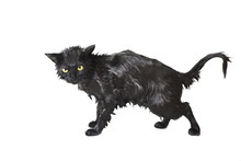 Black Cute Soggy Cat After A Bath, Funny Little Demon