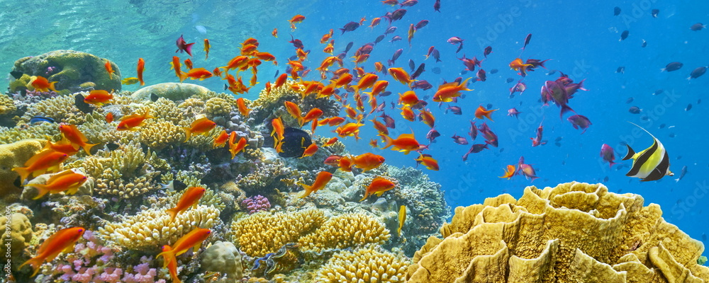Fototapeta Underwater view at coral reef and fishes, Dahab, Red Sea, Egypt