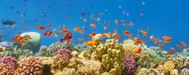 Underwater view at coral reef and fishes, Dahab, Red Sea, Egypt