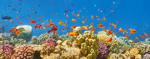 Staande foto Koraalriffen Underwater view at coral reef and fishes, Dahab, Red Sea, Egypt