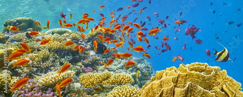 Poster Coral reefs Underwater view at coral reef and fishes, Dahab, Red Sea, Egypt