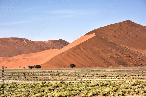 Papiers peints Corail Namib Desert, Namibia