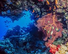 Small Swim Through Underwater