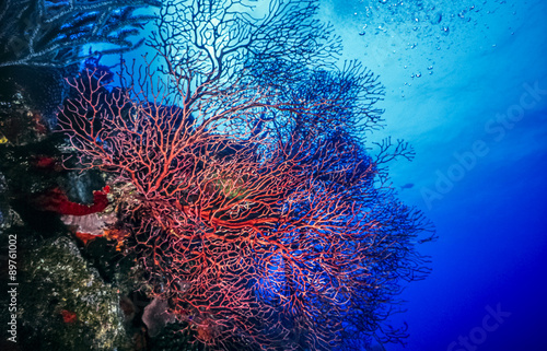 In de dag Onder water Underwater coral reef