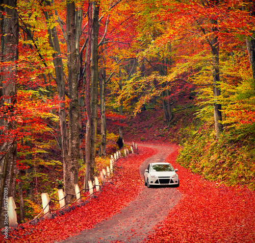 Country road in the autumn forest.