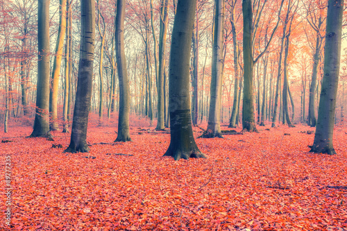 Poster Corail Colorful autumn forest