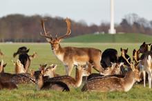 A Herd Of Deer In The Phoenix ...