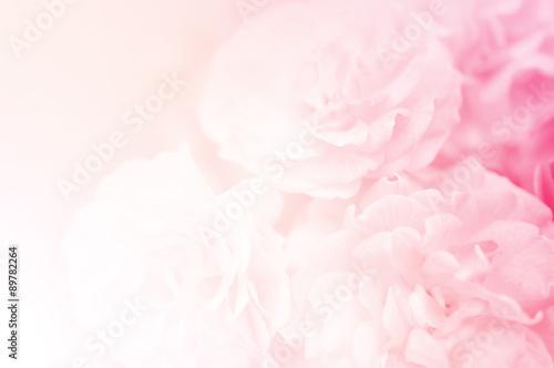 Fototapeta sweet roses, in soft style for background  obraz na płótnie