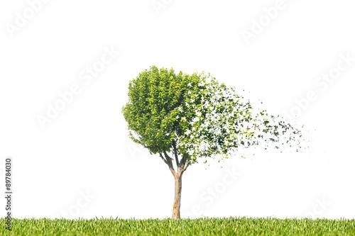 Photo arbre automne dispersion désintégration particule feuille