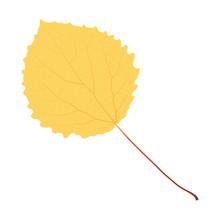 Yellow Aspen Leaf