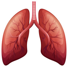 Lung Cancer Diagram In Detail
