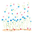 Composition of forget-me-not. Decoration with blooming blue flowers. White background. Flower backdrop. Watercolor hand drawn illustration.