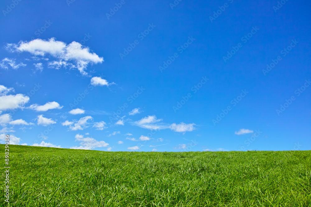 Fototapety, obrazy: 草原と青空