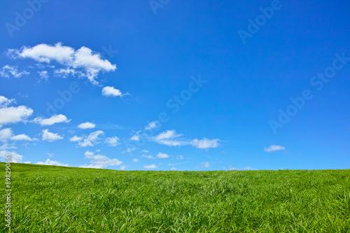Foto op Plexiglas Weide, Moeras 草原と青空