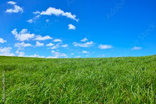 Fényképezés 草原と青空
