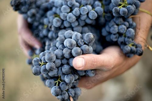 Fotomural  Grape bunch in hands