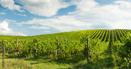 Foto op Aluminium Wijngaard Viticoltura