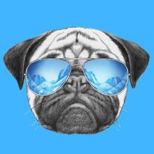 Portrait Of Pug Dog With Mirror Sunglasses. Hand Drawn Illustration.