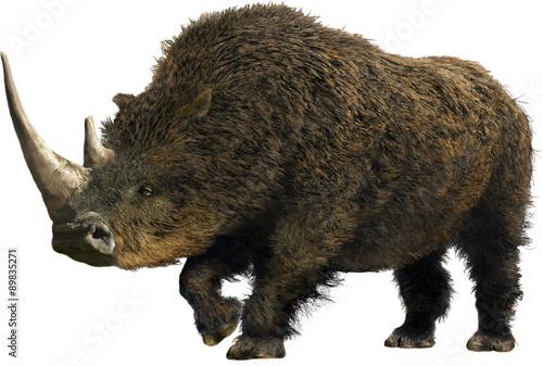 Poster Rhino Woolly Rhinoceros/Collage representative of the Pleistocene (Ice Age) - woolly rhinoceros.