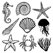 Sea Fauna Vector Set