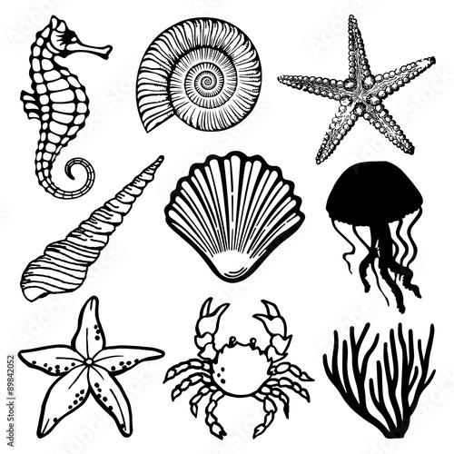 Fotomural Sea Fauna Vector Set