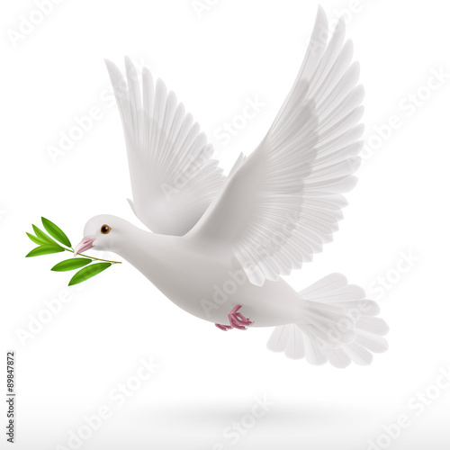 Foto Fly dove