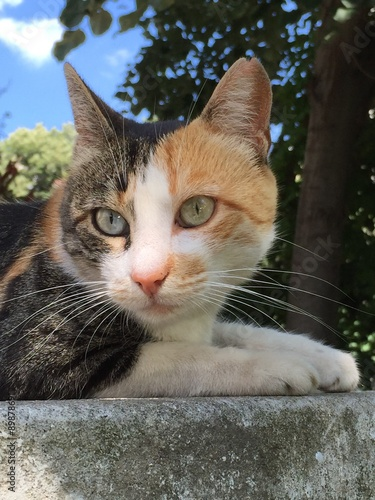 Spoed Foto op Canvas Canada Cat with two different color eyes