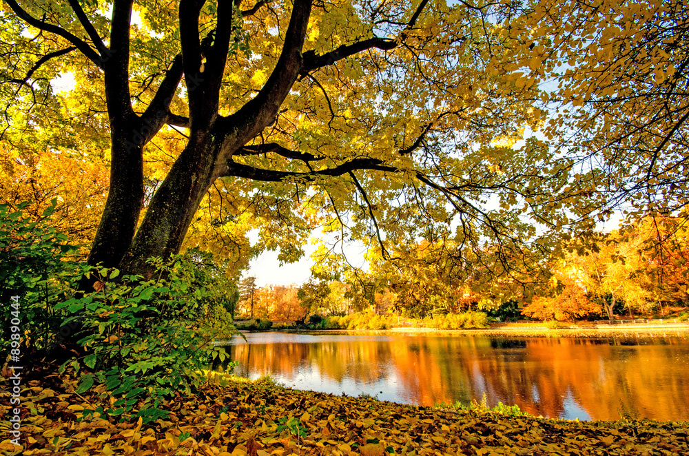 Fototapety, obrazy: Cudowny jesienny dzień