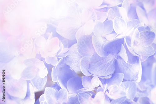 Montage in der Fensternische Hortensie sweet hydrangea flowers background