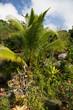 Paesaggi della Polinesia