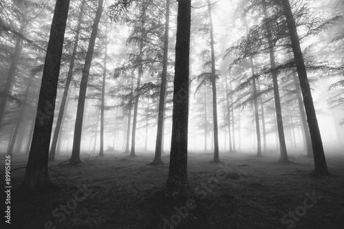 black and white foggy forest #89915826