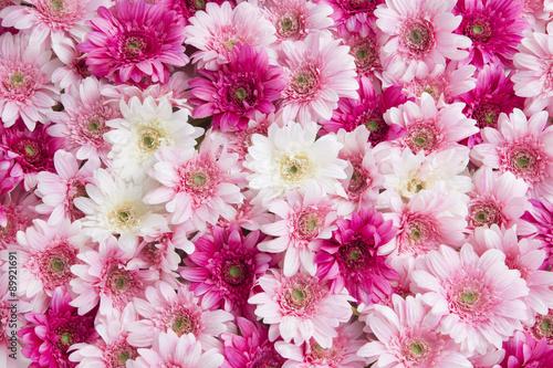 ピンクと白の花1