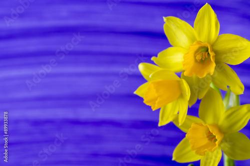 Foto op Canvas Narcis Daffodils.