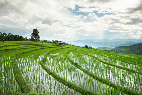 Fotobehang Rijstvelden Green Terraced Rice Field in Chiangmai, Thailand