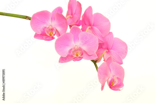 Foto-Leinwand ohne Rahmen - purple orchid flower on white background (von Alexander Zlatnikov)