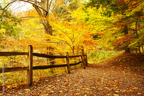 Canvas Prints Honey Autumn scene