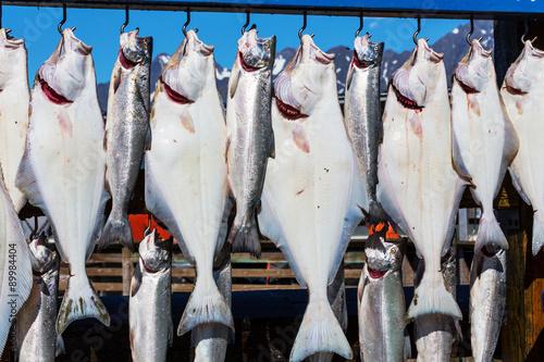 Slika na platnu Fishing in Alaska