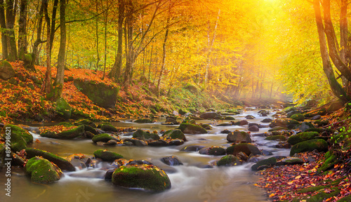 Wall Murals Forest river Landscape magic river in autumn forest at sunlight.