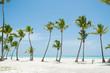 Palms at Juanillo beach in Dominican republic