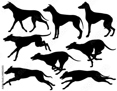 Greyhound dog silhouettes Canvas Print