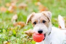 Cute Fluffy Dog With Ball