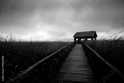 Foto-Lamellenvorhang - Wooden path trough the reed (von Sved Oliver)
