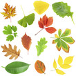 Beautiful autumn and green leaves, isolated on white