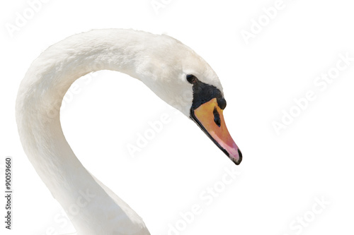Foto op Aluminium Zwaan Swan portrait isolated on white.
