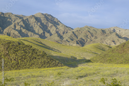 Fotografia, Obraz  Mountain view and spectacular desert gold and various spring flowers south of Fu