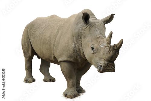 Spoed Foto op Canvas Neushoorn White Rhinoceros