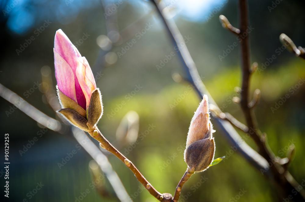 Fototapety, obrazy: primavera in fiore