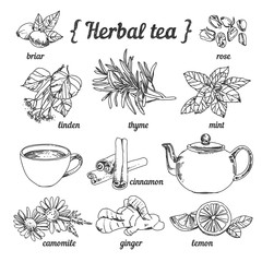 FototapetaHerbal tea collection in sketchy style: teapot and cup, herbs, flowers and plants