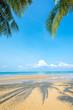 Shadow coconut palm tree at the beautiful beach