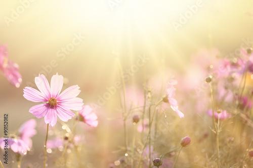 In de dag Bloemen spring background
